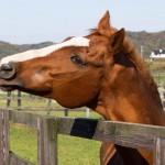【ウイポ8 2016】COM馬ヤエノムテキが中距離路線で無双を始めた!