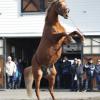ウイニングポスト8 2017 種牡馬バグ